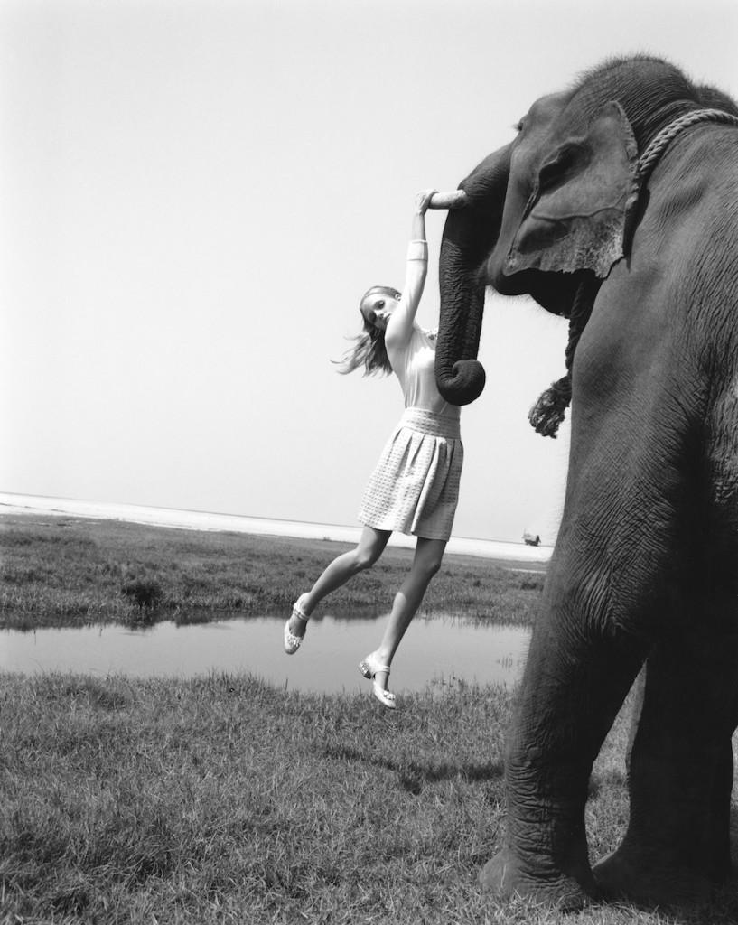 toll_elephant.jpg.CROP.original-original