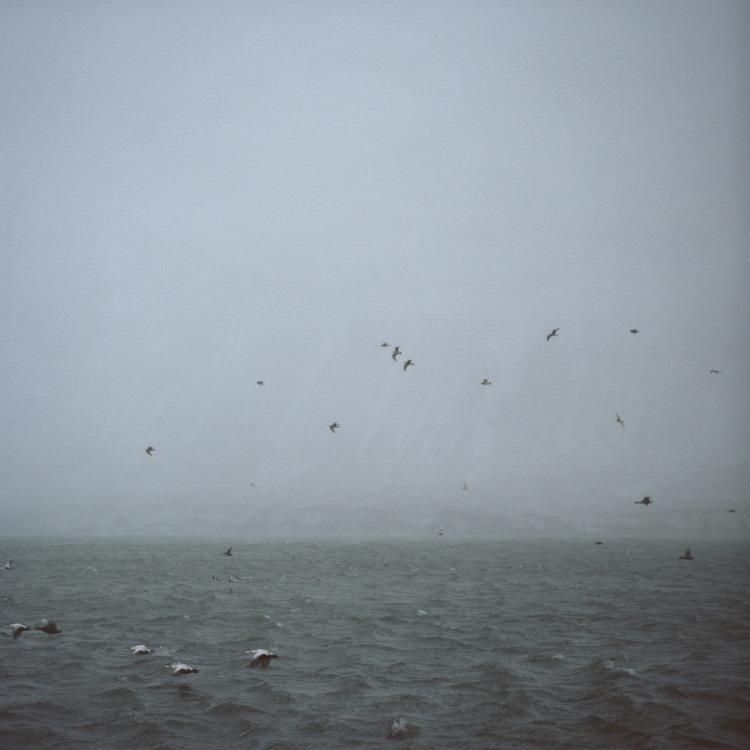 The Birds_750