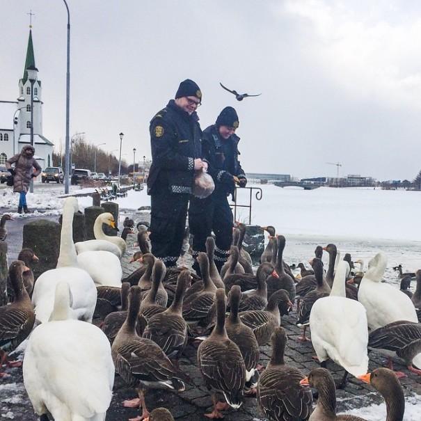 reykjavik-police-department-instagram-logreglan-iceland-5-605x605